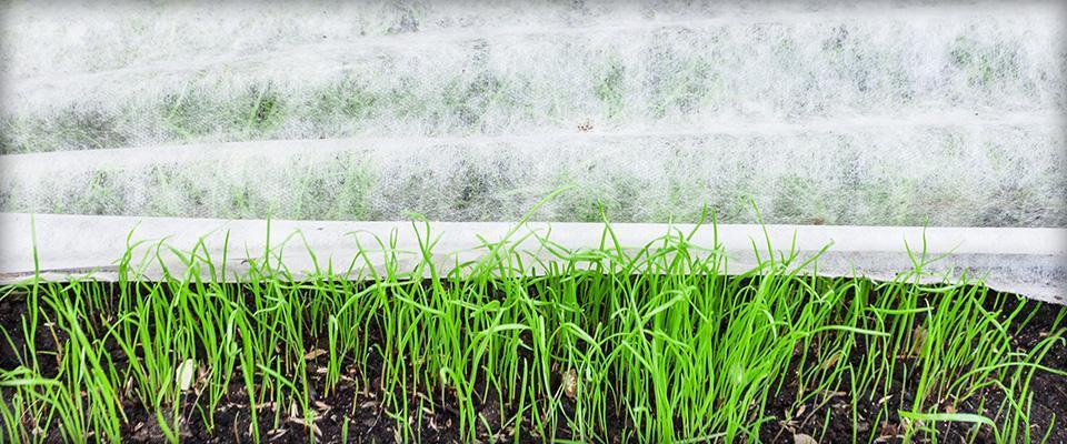 Włókno chroniące rośliny