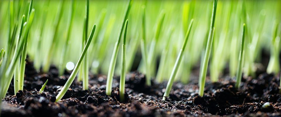 Rosnąca trawa